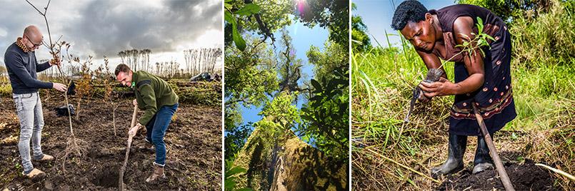 Fotos bomen planten